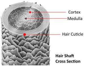 activker-capello